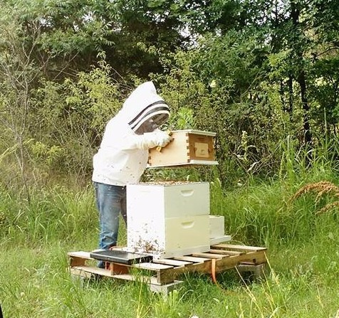 One of our 2 Flow Hives